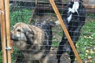 Открытие стационара для животных